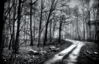The Road-BW